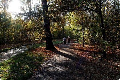 Bois de Boulogne: Un patrimoine au coeur de la Capitale