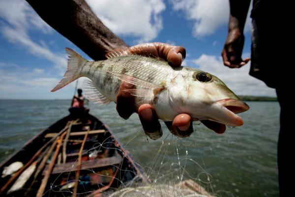 Pacifique Sud-Ouest : l'océan mélanésien est sous pression !
