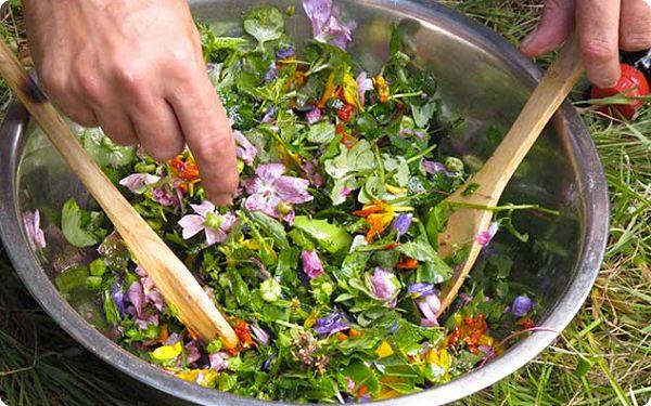 Des plantes sauvages dans vos assiettes, pourquoi pas ?
