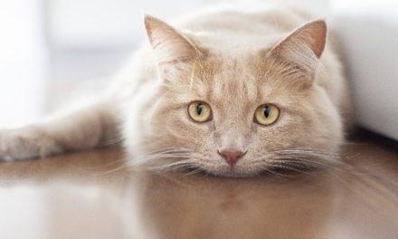 Les chats vous protègent vous et votre maison des fantômes et des esprits négatifs