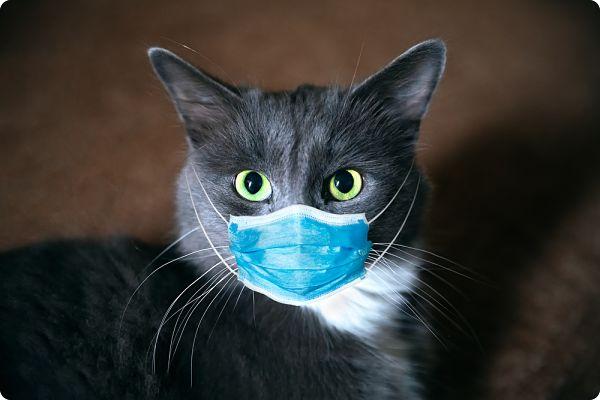 La pollution, virus de l'environnement